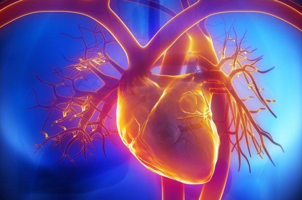 A Short Introduction to Cardiovascular