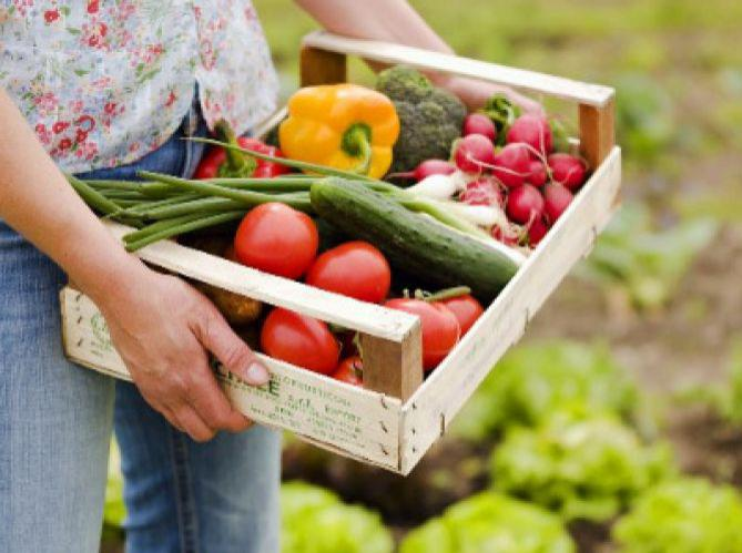 Organic Food To A Healthy Life