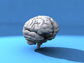 The Significance Of Brain Assessments