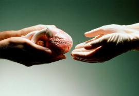 Transplant Hepatology
